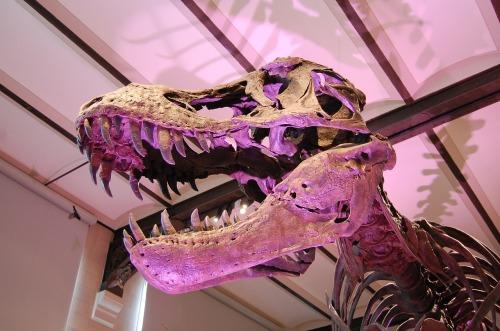 dinosaur-798706_1280